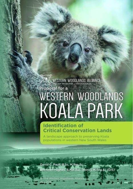 Koala Report   Australian Forests   Scoop.it