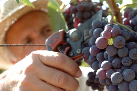 Marketing agroalimentare contro la crisi. Ma l'impresa italiana è ostacolata | Gli alberi nei giardini | Scoop.it