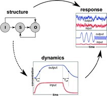 Dynamic and structural constraints in signal propagation by regulatory networks - Molecular BioSystems (RSC Publishing) | SynBioFromLeukipposInstitute | Scoop.it