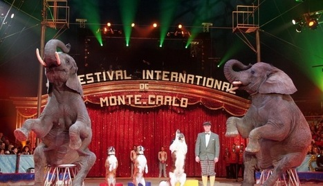 Book your tickets to the International Circus Festival | Things to do in India | Scoop.it