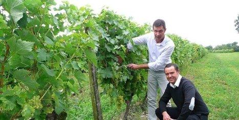Cognac : un nouveau président à la tête du syndicat viticole | Actualités du Cognac | Scoop.it