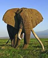 Uganda ponders new wildlife law as elephant poaching numbers drop - eTurboNews | practice | Scoop.it