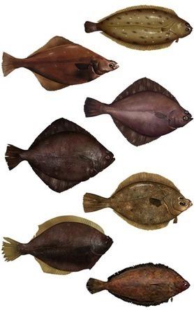 NOAA - FishWatch: Aquaculture FAQs | Aqua-tnet | Scoop.it