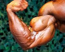 4 Tips for bigger biceps fast | Online Personal Training | Scoop.it