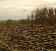 Sénégal : La terre est source des conflits. | Questions de développement ... | Scoop.it