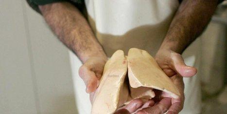 Dordogne : le prix du foie gras va augmenter | Agriculture en Dordogne | Scoop.it
