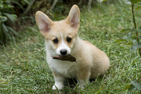 Cutest Dog Breeds: From Puppy To Adult | Dog Training - Mark Mendoza | Scoop.it