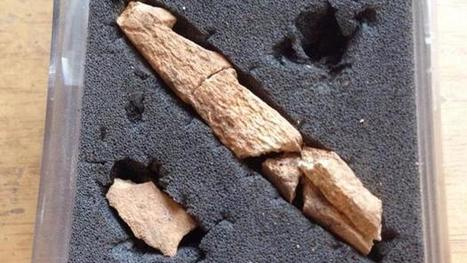 Encuentran dos arpones de pesca de hace 15000 años en la Cova del Parco (Lleida) | Aux origines | Scoop.it
