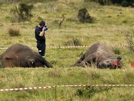 Five rhino poachers arrested in KZN | What's Happening to Africa's Rhino? | Scoop.it