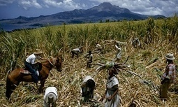 The food sector braces itself for crackdown on modern-day slavery | Supermarkets, Retail industry & CSR | Scoop.it