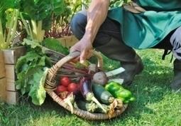 Etude BioNutriNet : Alimentation BIO et son impact  nutritionnel, économique, environnemental et toxicologique – NutriNet-Santé | Ambassadeurs NutriNet-Santé | Scoop.it
