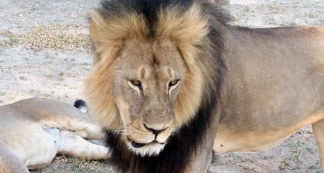 Cecil the Lion's Killer Goes Off the Grid, But Protected by US Police / Sputnik International | Nature Animals humankind | Scoop.it