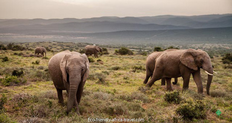 Can Ecotourism Harm Africa | Ecotourism in Kenya | Scoop.it