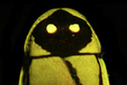 Photos: the top new species discoveries in 2012 | Sustainable imagination | Scoop.it