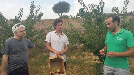 Malta: Farmers offered opportunity to benefit from successful organic farming business model | CIHEAM Press Review | Scoop.it