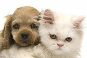 Bunny's Blog: Top 10 Pet Names of 2012 | Pet News | Scoop.it
