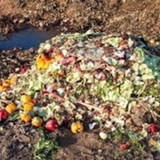 Food and capitalism: a crisis of waste and destruction | real utopias | Scoop.it