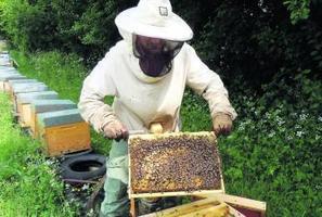 Les abeilles crient famine | EntomoNews | Scoop.it