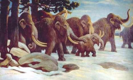 DNA proves mammoths mated beyond species boundaries | News we like | Scoop.it