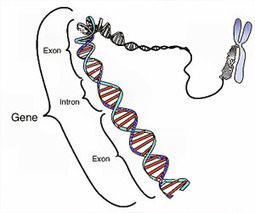 Research shows gene defect's role in autism-like behavior   ISO Mental Health & Wellness   Scoop.it