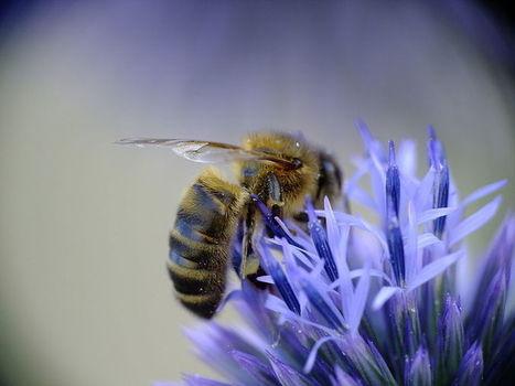 Les abeilles et le bouleversement climatique | Le jardin stagirite | Scoop.it