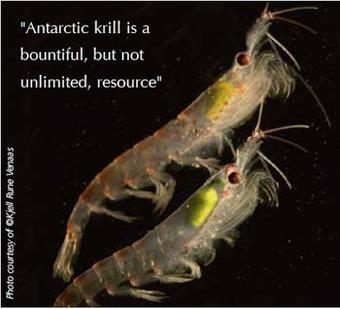 The Aquaculturists: 19/06/2015: Antarctic Krill: Lifeblood of the Southern Ocean | Global Aquaculture News & Events | Scoop.it