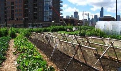 Can Urban Farming Grow Detroit's Economy? | ICIC | New Orleans ... | Vertical Farm - Food Factory | Scoop.it