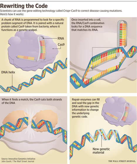 Why Crispr-Cas9 Gene-Editing Technology Has Scientists Excited | Amazing Science | Scoop.it