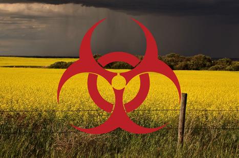 Monsanto/Bayer's GM Plants Contaminate Europe Despite Ban | Questions de développement ... | Scoop.it