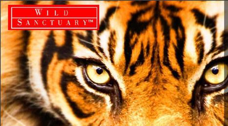 Wild Sanctuary | Home | DESARTSONNANTS - CRÉATION SONORE ET ENVIRONNEMENT - ENVIRONMENTAL SOUND ART - PAYSAGES ET ECOLOGIE SONORE | Scoop.it