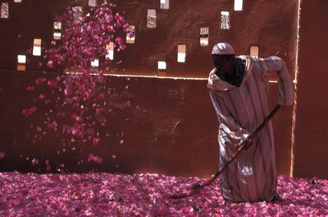 Roses in Morocco... | Arts & luxury in Marrakech | Scoop.it