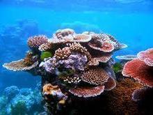 Saving Caribbean Coral Reefs | GarryRogers NatCon News | Scoop.it