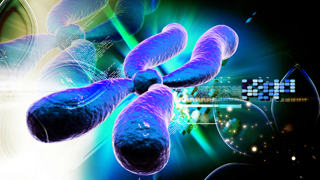 How Artificial Chromosomes Could Transform Humanity | leapmind | Scoop.it