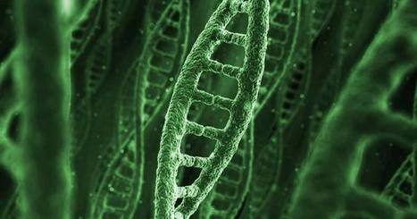 To Protect Weed from Monsanto Patenting, Company Begins Mapping Cannabis Genome | Virology News | Scoop.it