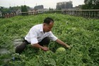 Urban Agriculture Hits the Rooftops in China | The Grant Column | Eetbare Stad | Scoop.it