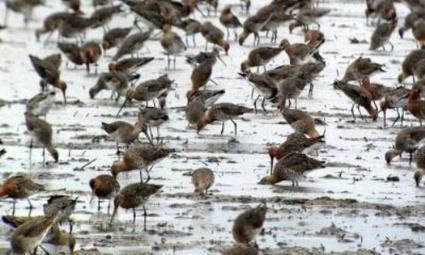 Noticias Ambientales Internacionales: Por el cambio climático cambia la migración de las aves | Agua | Scoop.it