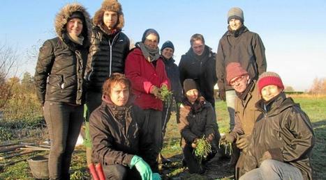 La phacélie, le trèfle, l'avoine, le tournesol protègent les sols et l'eau   Le lycée agricole de Caulnes   Scoop.it
