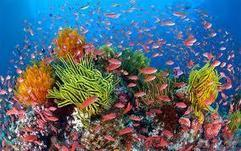 Vale the reef | Sustainable Futures | Scoop.it