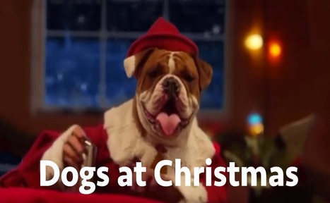 Dogs at Christmas - Santa's Little Helpers | Dog Pictures - Pindoggy | Scoop.it