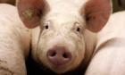 Scientists: overuse of antibiotics in animal agriculture endangers humans | The Healthy & Green Consumer | Scoop.it