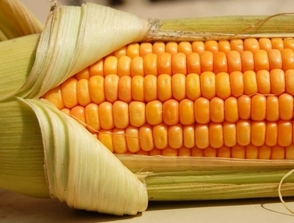Side Effects of Corn   Food, Health, Recipes and Tips   Scoop.it