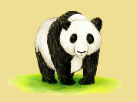 How to Draw a Panda | Bears | Scoop.it