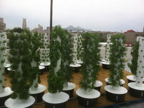 Sustainable Aeroponic Rooftop Garden Created Above Downtown Rouses | Silicon Bayou News | Vertical Farm - Food Factory | Scoop.it