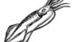 Omega 3 squid oil processor gets Australian approval | Nutrition & Health | Scoop.it
