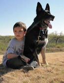 Bunny's Blog: Adopt a Retired Military Working Dog | Pet News | Scoop.it