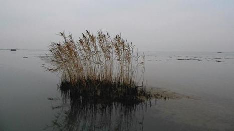 Nel Delta del Po, sui canali dove il tempo scorre lento | Polesine | Scoop.it