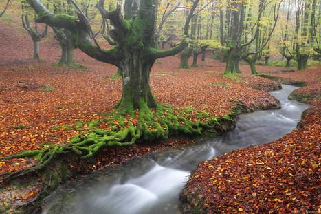 The breath of the forest - Iñaki Bolumburu | Reflejos | Scoop.it