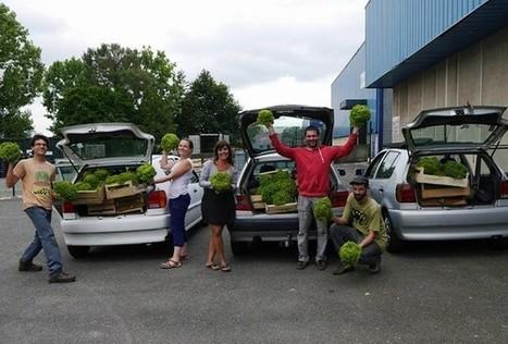 Les glaneurs sauvent les légumes du gâchis | Say Yess | Innovation territoriale, développement durable et projets d'avenir | Scoop.it