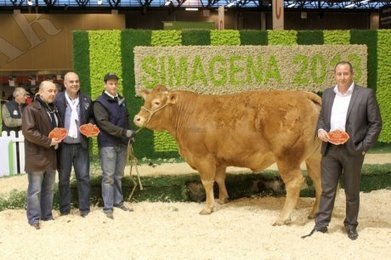 Dordogne : avec la vache Daisy, les clients sauront ce qu'ils mangent   Agriculture en Dordogne   Scoop.it