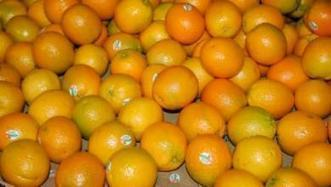 Citrus HLB fight gets boost from math model | Orchard Crops content from Western Farm Press | Citrus Science | Scoop.it